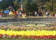 Đà Lạt: Trên 56.500 Du Khách Tham Quan Hội Hoa Xuân