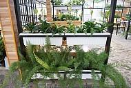 Độc đáo quán café vườn rau tại Đà Lạt