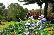 Vườn Hoa Minh Tâm