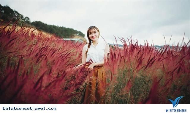 Ghé Đà Lạt cuối thu, thăm đồi cỏ hồng đẹp đến nao lòng