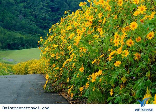 Khám Phá Đà Lạt Vào Mùa Hoa Dã Quỳ Vàng Rực Rỡ